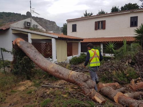ecocet messa in sicurezza - abbattimento alberi ad alto fusto
